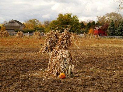 pumpkins in the field...that is what we are...stack away with me...