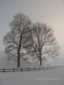 misty by the mounds