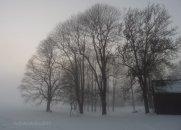 translucent misty trees
