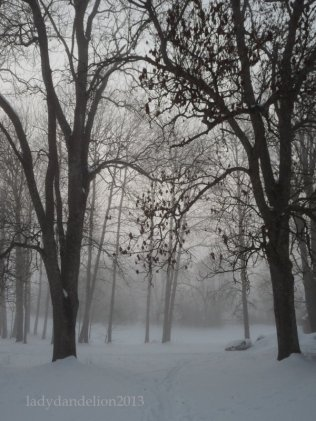 more trees and mist