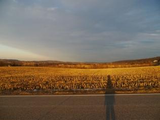 me and the sleeping corn field